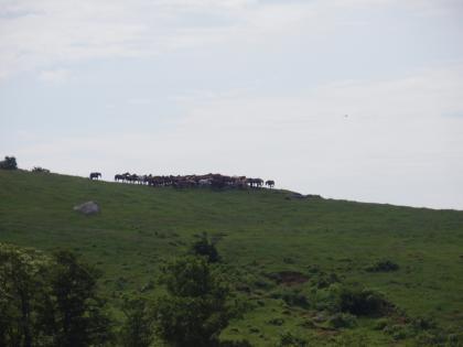 11_P7190206_荒川牧場の馬