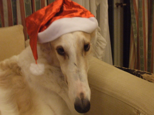 クリスマスわってぃ