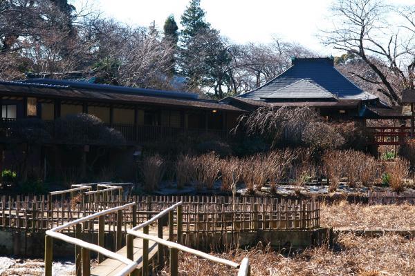 菖蒲、あじさいの咲く庭
