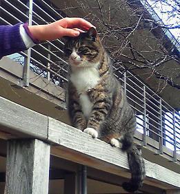 新宿御苑の猫①