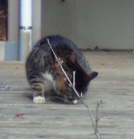 新宿御苑の猫②