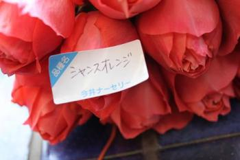 Blog 087s