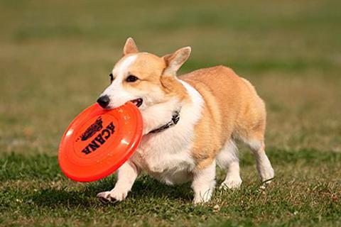 dhiskdog.jpg