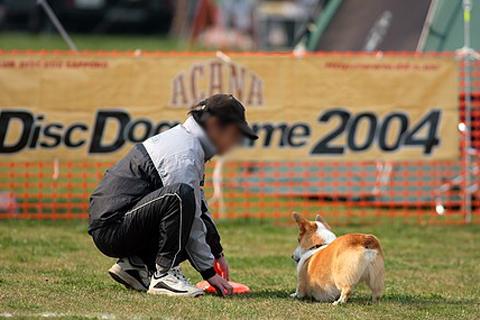 dhiskdog02.jpg