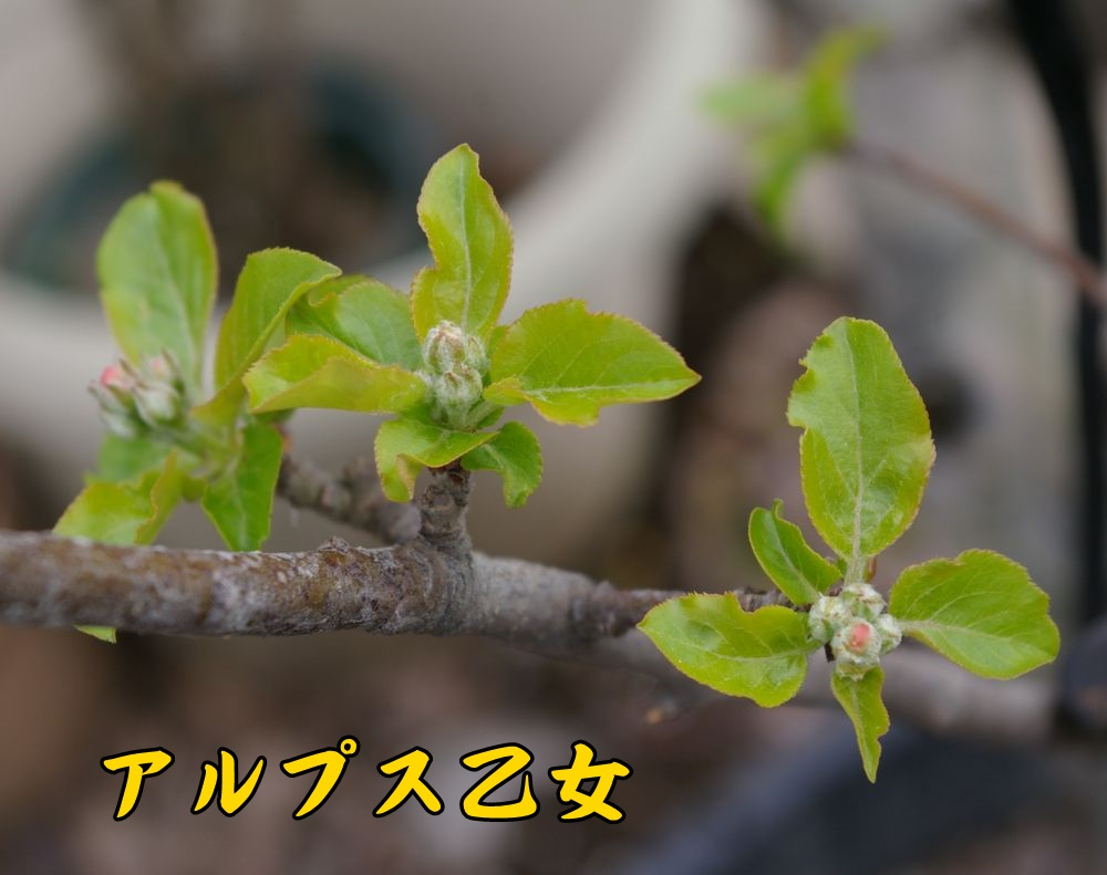 ALotome0324c1.jpg
