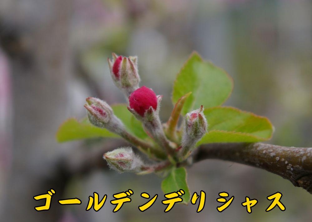 Gdeli0324c1.jpg