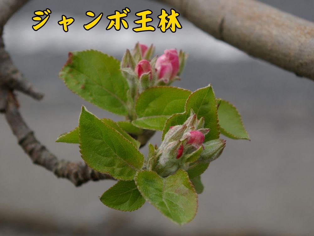 Jorin0324c1.jpg