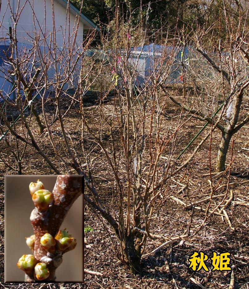 akihime0223c1.jpg