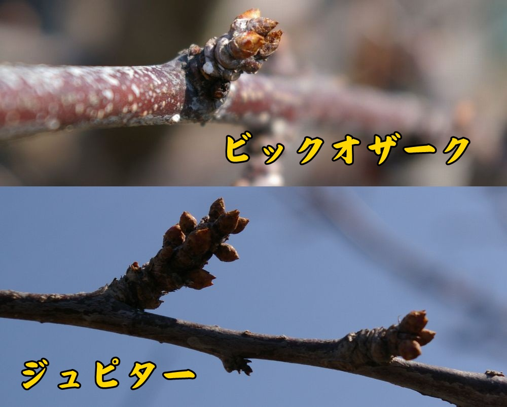 bigo_jyupi0223c1.jpg