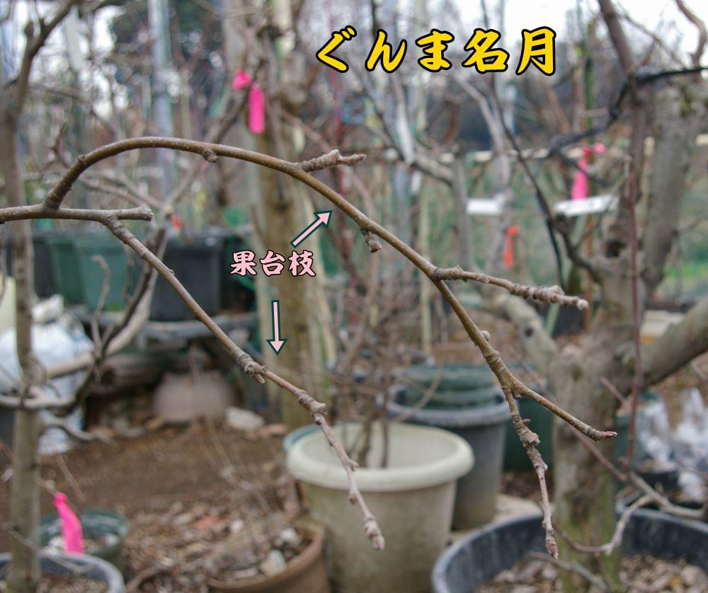 gunma0215c2.jpg