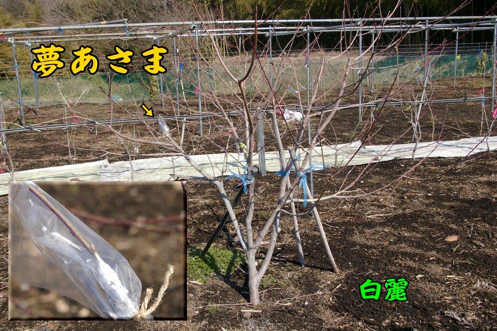haku_yuac1.jpg