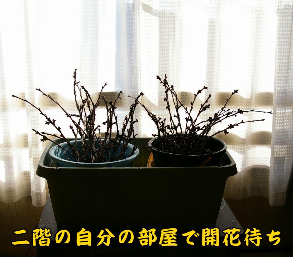 jyufunyou0211c2.jpg