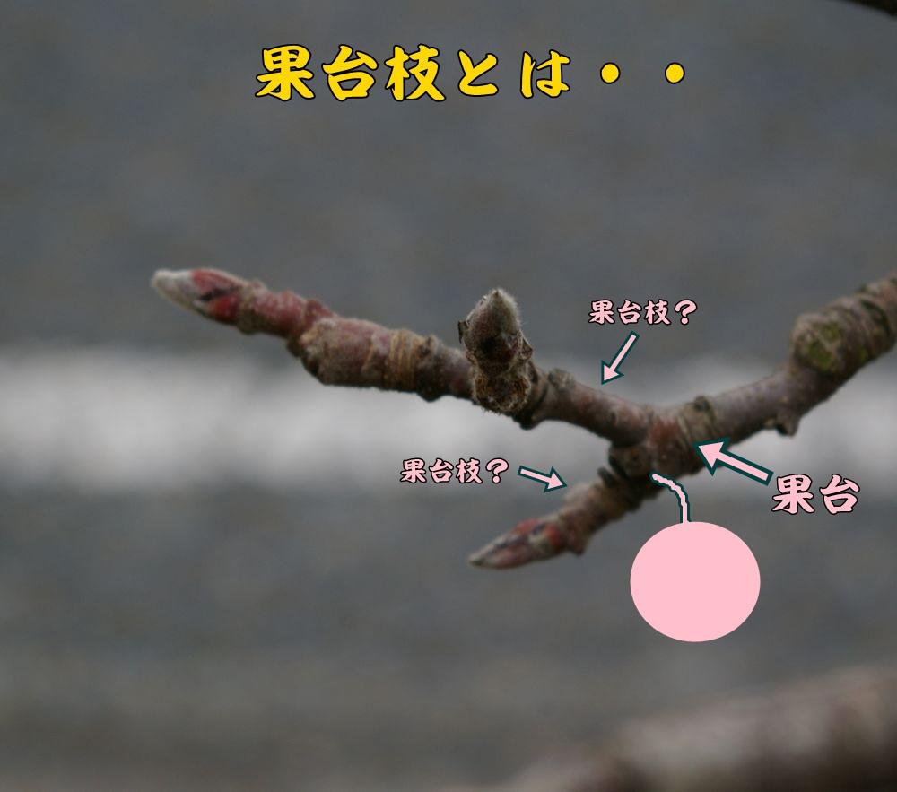 kadai0215c1.jpg