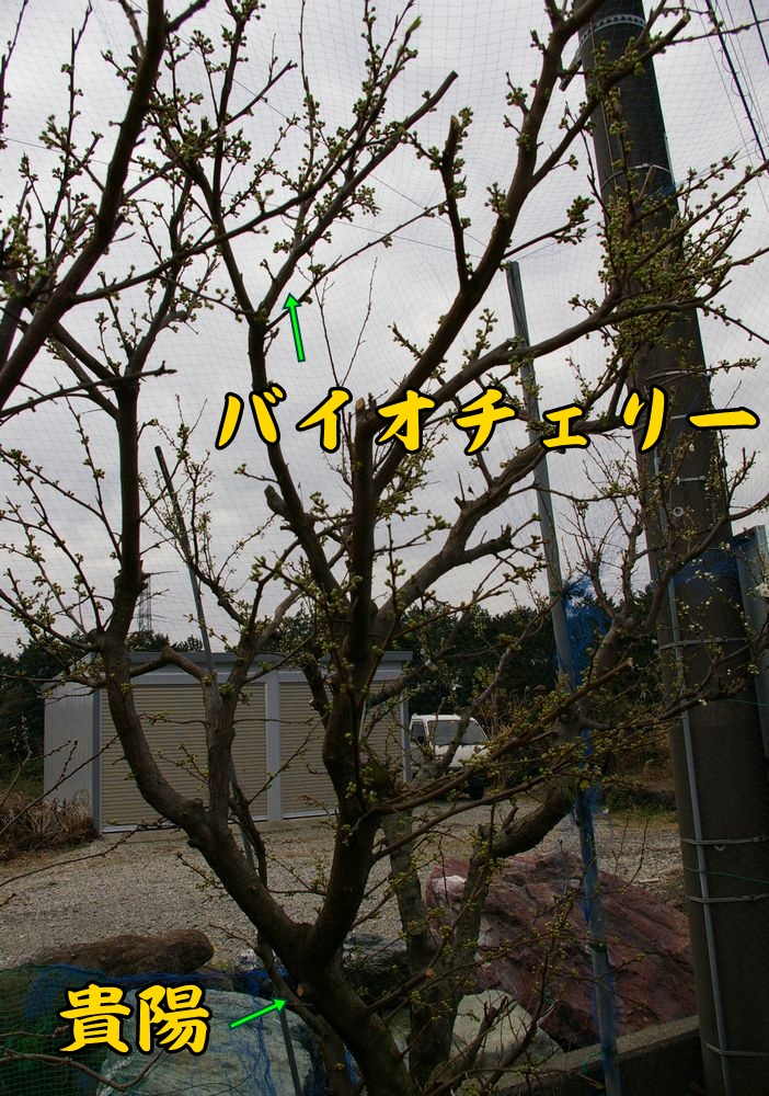 kiy_bio0311c1.jpg