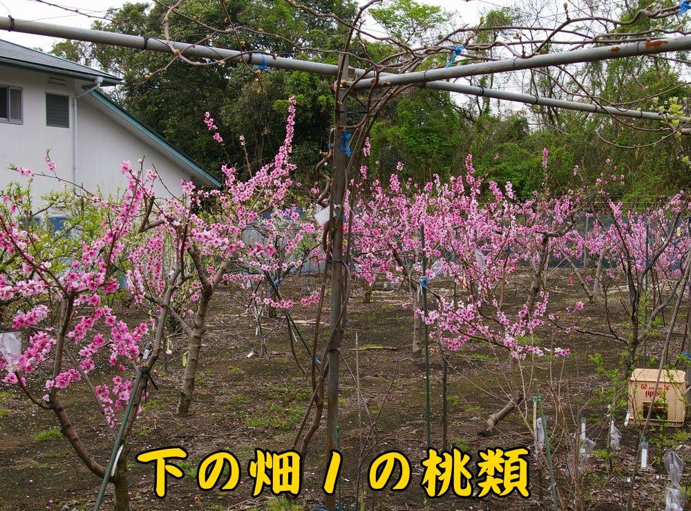 momo0325c1.jpg