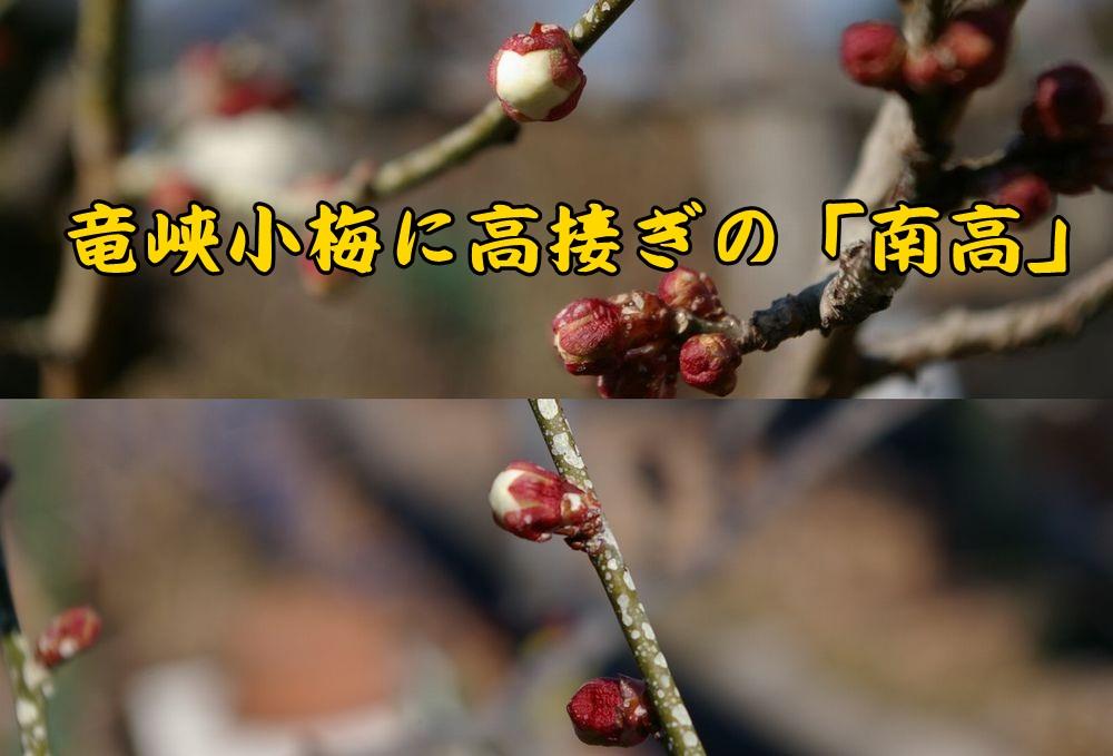 nanko0213c1.jpg