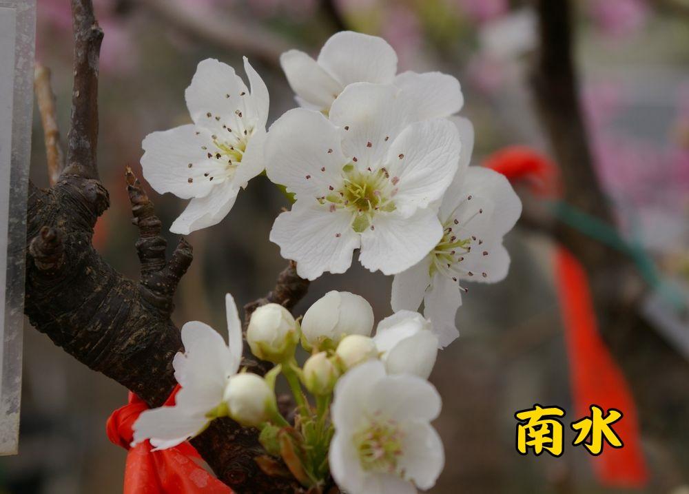nansui0323c1.jpg