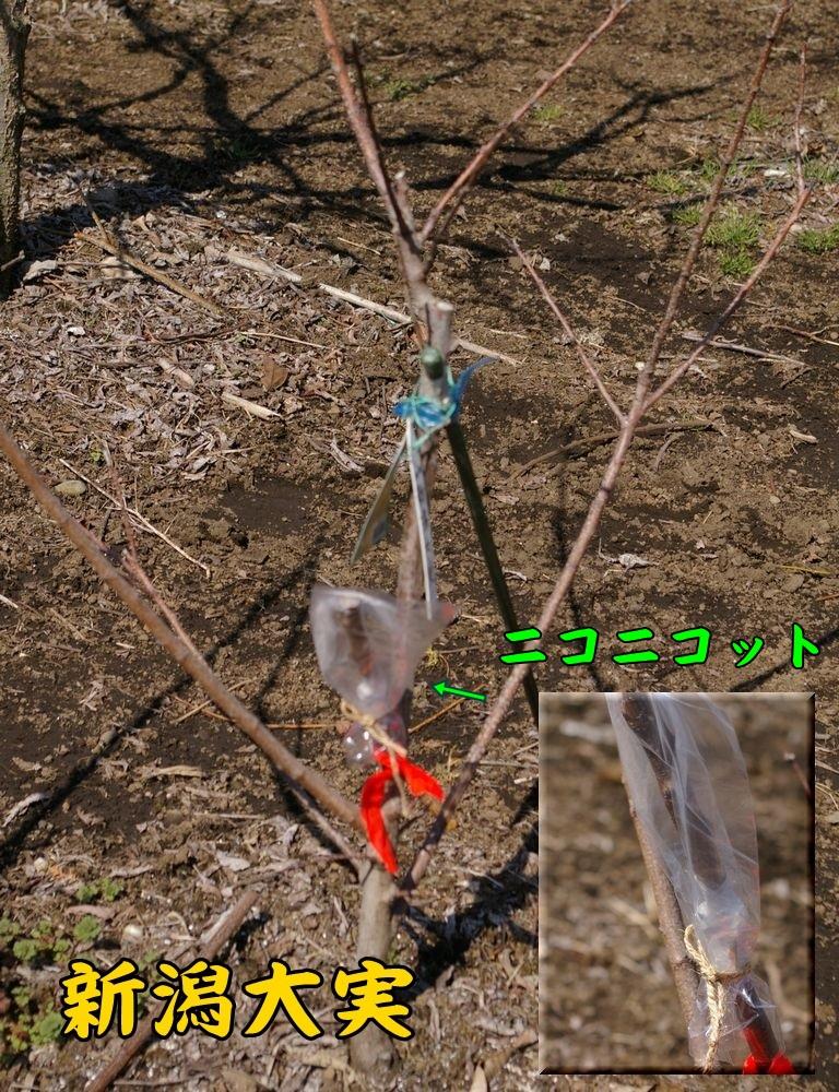 nigata0304c1.jpg