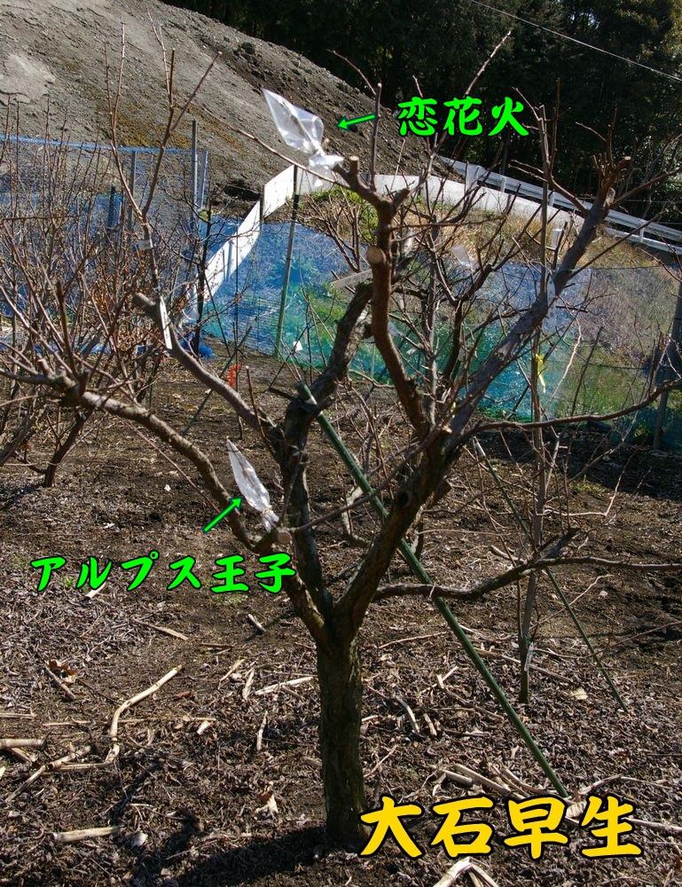 oisi_koi_aru0304c1.jpg