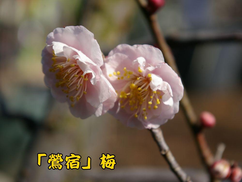 ousyuku0213c1.jpg