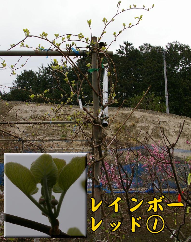 rain0325c1.jpg