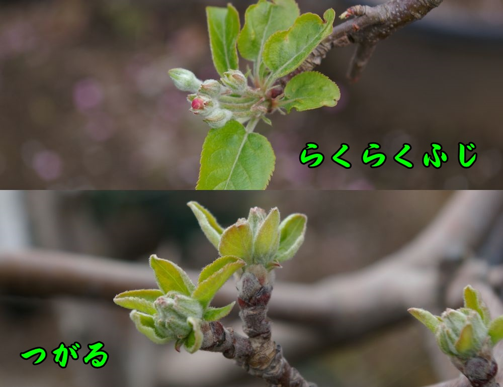 rakuf_tug0324c1.jpg
