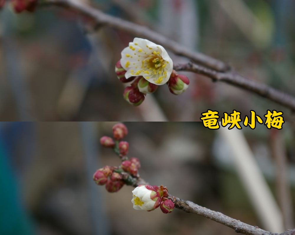 ryukyo0215c1.jpg