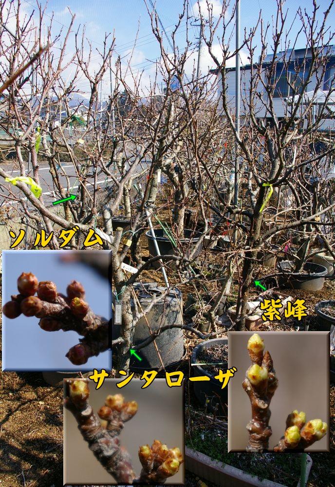 san_sih_sol0223c1.jpg