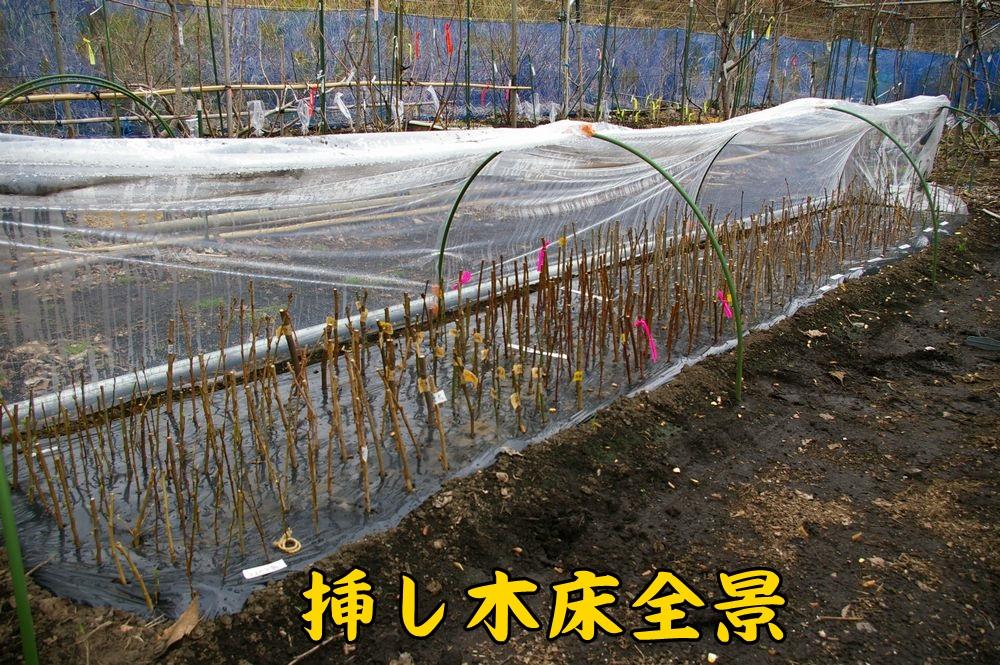 sasidoko0303c1.jpg