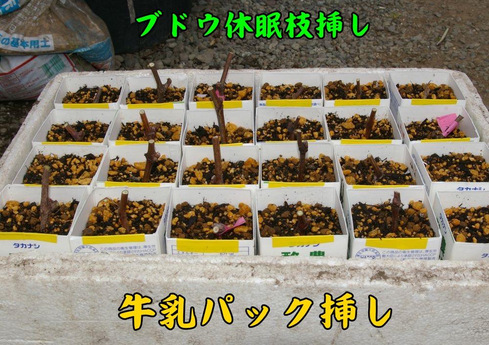 sasiki0327c1.jpg