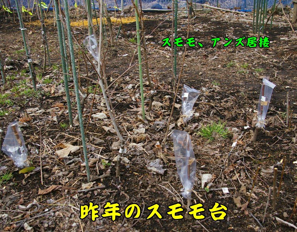 sumomo0207c2.jpg