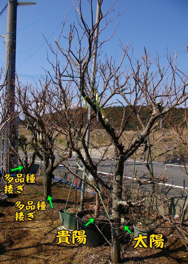 sumomo0223c1.jpg