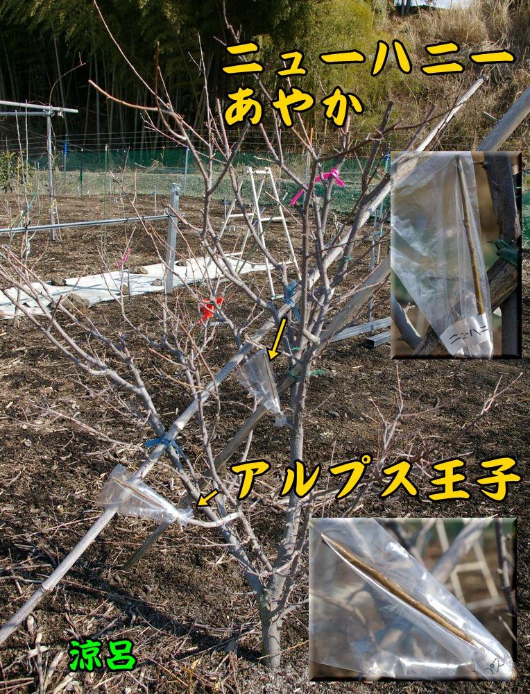 suzu_ALnewc1.jpg