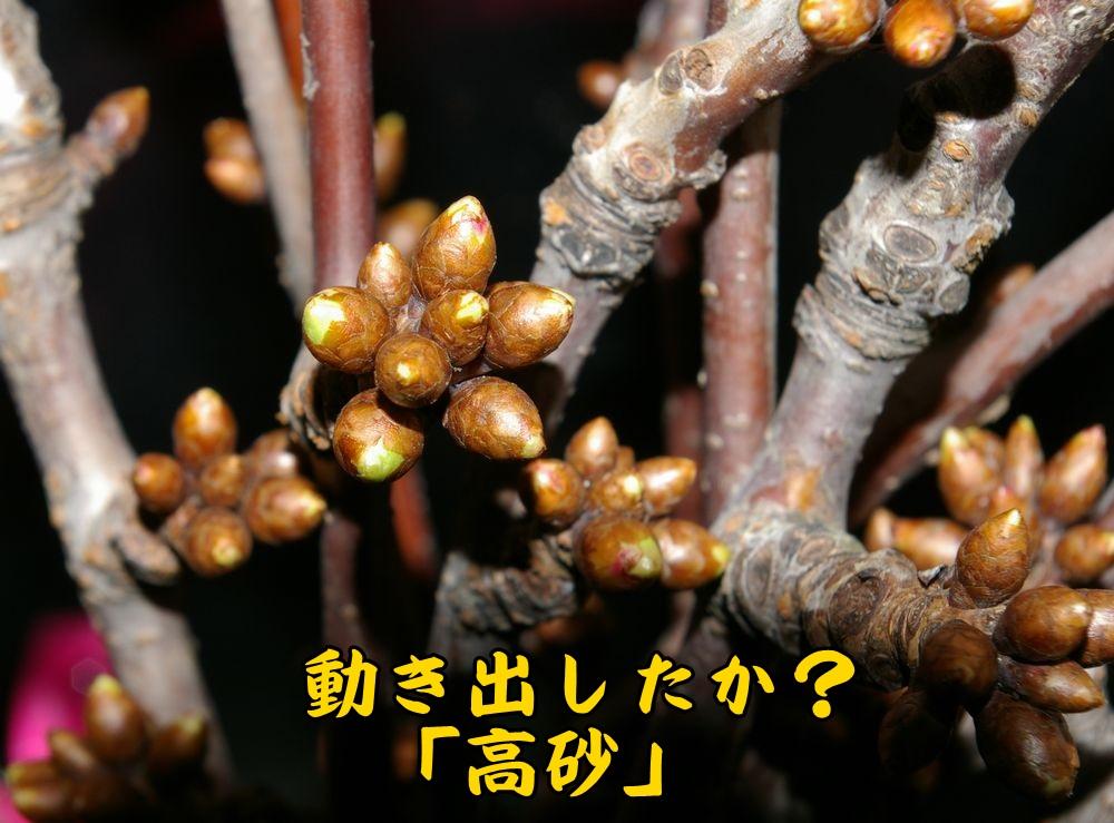 takasago0227c1.jpg