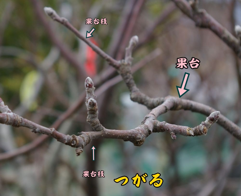 tugaru0215c1.jpg