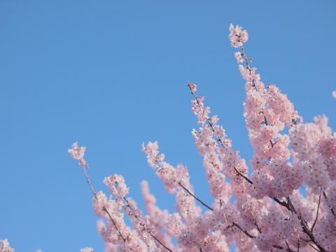 春木径/幸せ道の春めき