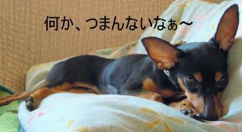縺、縺セ繧峨↑縺Юconvert_20110704153335