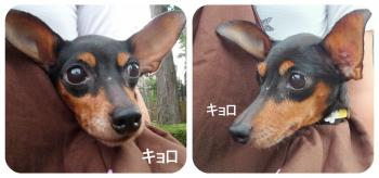 縺阪g繧浩convert_20110704161929