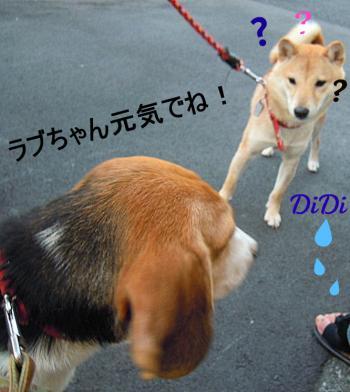 繝舌う繝舌う_convert_20110829195957