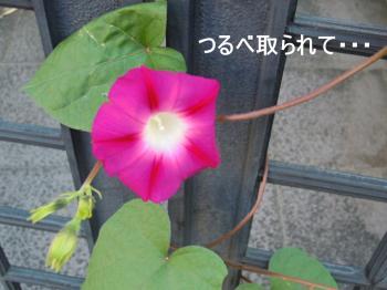 縺ゅ&縺後♀_convert_20111028120115