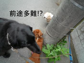 2011_0526_054152-P1260858_convert_20110526141457.jpg