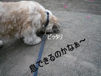 2011_0526_060319-P1260874_convert_20110526141549.jpg
