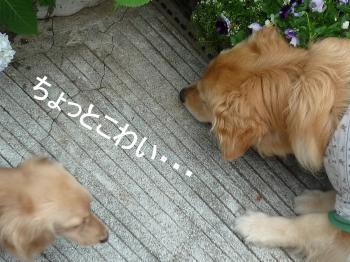 2011_0531_072717-P1270684_convert_20110531154320.jpg