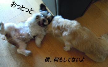 DSCN0227_convert_20111029193147.jpg