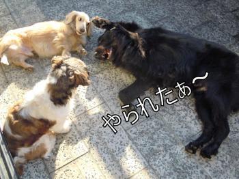 DSCN3025_convert_20111117140050.jpg