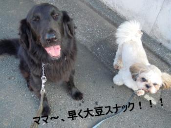 DSCN4274_convert_20110915204307.jpg