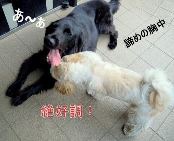 DSCN6105_convert_20110928143919.jpg