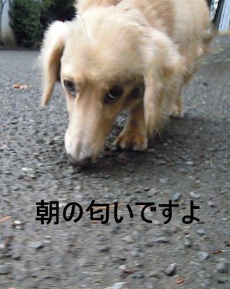 DSCN9063_convert_20111023150730.jpg