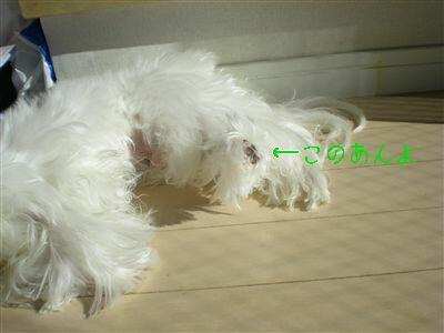DSCN2345_R.jpg