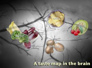 Map of Taste Qualities